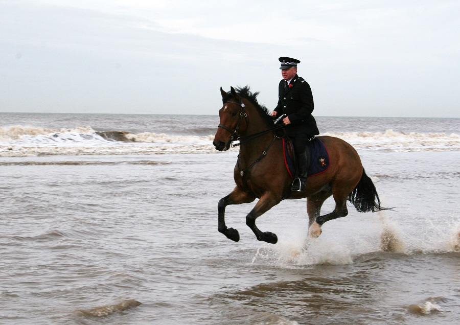 Brave Lancashire Police horse Caton swaps Preston for the Chilterns