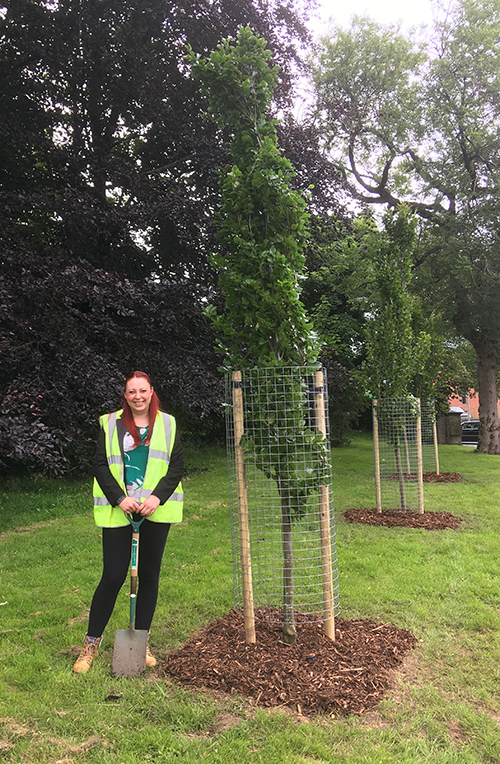 Branching out: First new trees planted