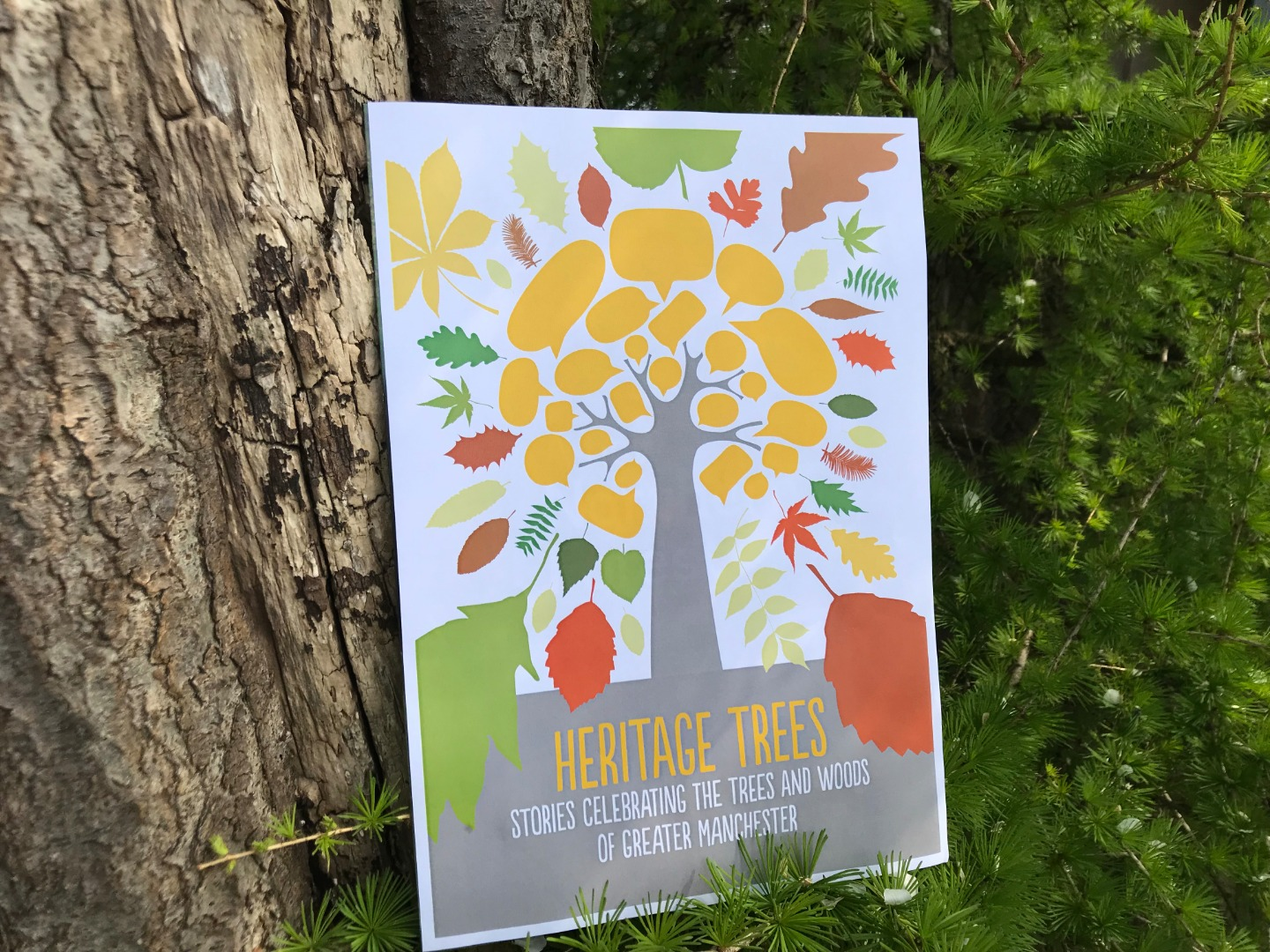 New legacy book launched by City of Trees